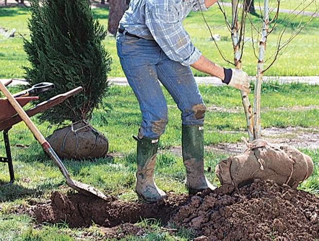 uomo che pianta un albero