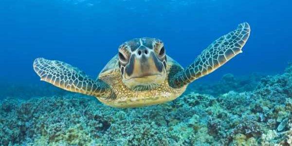 foto tartaruga