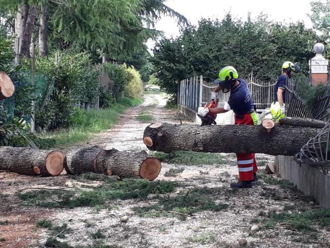 17 Agosto 2021. I volontari esperti e formati all'uso della motosega rimuovono gli alberi caduti