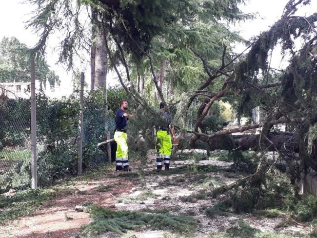 17 Agosto: i Volontari sono impegnati nella rimozione degli alberi caduti sulle strade